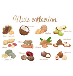 Collection mix of different types nuts vector