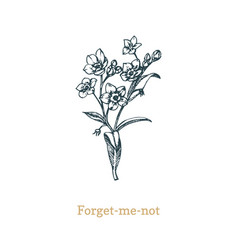 forget me not on white vector image