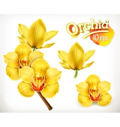 Orchid flowers icon set vector image vector image