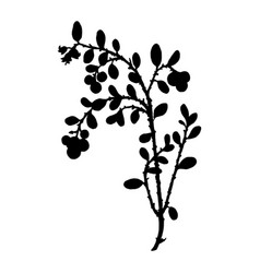 Silhouette of cowberry plant vector