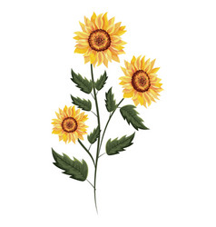 spring sunflower drawing with leaves vector image