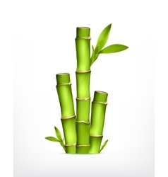 Stem of bamboo vector image