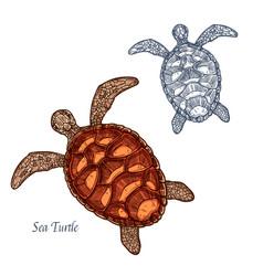 sea turtle isolated sketch icon vector image vector image