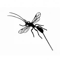 braconid wasp vector image vector image