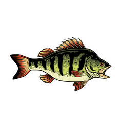 Freshwater fish vintage concept vector