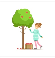 Girl Picking Up RIpe Red Apples From The Tree vector