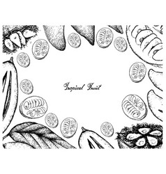 Hand drawn frame of ripe madan and monk fruits vector