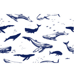 sea whales seamless pattern vector image