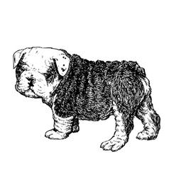 Bulldog 02 vector image