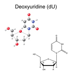 Chemical formula and model of deoxyuridine vector image