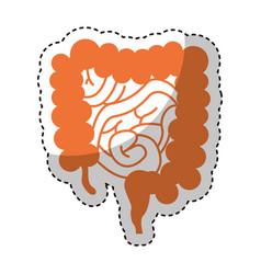 human organ intestine icon vector image