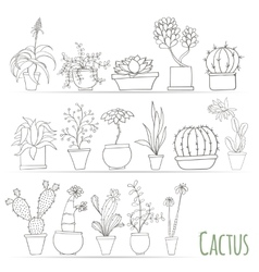 Set of cactus in pots Isolated on white background vector