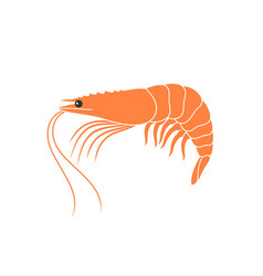tiger shrimp vector image