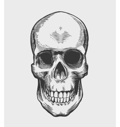 Skull in vintage engraving style vector image vector image