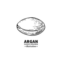 argan drawing isolated vintage vector image