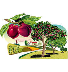 Branch of plum and orchard vector