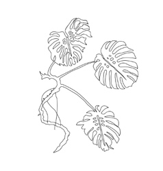 Monstera Leaves vector