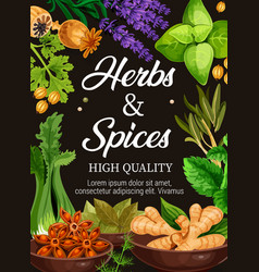 premium quality herbs and spices seasonings poster vector image