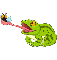cartoon frog catching fly vector image