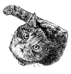 Cat 02 vector