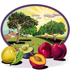 Cornice ovale con prugne e frutteto vector
