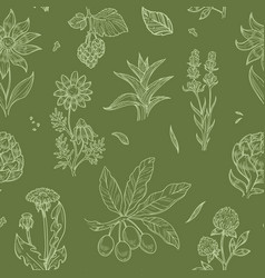 flowers and plants seamless pattern wild medical vector image