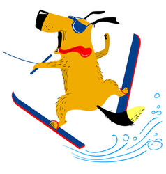 dog on water skiing the pet is engaged in summer vector image vector image
