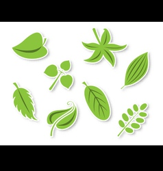Decorative leaves set vector image