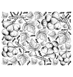 Hand drawn of cluster fig tree in white background vector