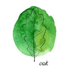 Leaf of oak tree vector