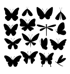 silhouette butterfly and wild moths vector image
