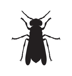 Wasp Sketch of Wasp Wasp isolated on white vector image vector image