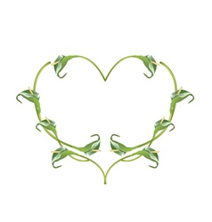 Beautiful Green Anthurium Flowers in Heart Shape vector image vector image