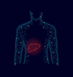 3d model of man and liver polygonal design vector