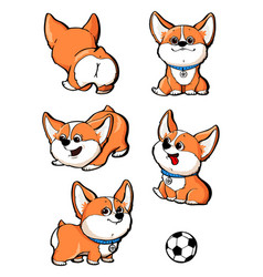 cute dog breed welsh corgi collection set vector image