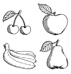 Fruits sketch vector