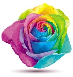 Raibow rose vector image