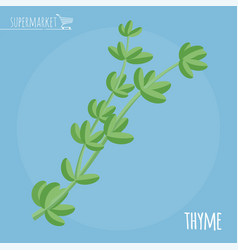 thyme flat design icon vector image vector image