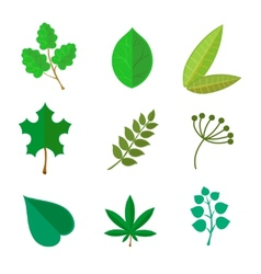 various green leaves set vector image vector image