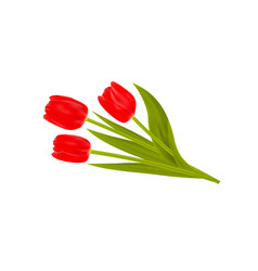 bouquet spring tulips flowers isolated on white vector image
