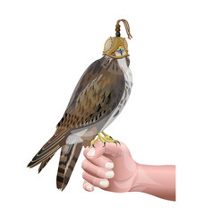 hunting falcon vector image