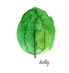 Leaf of holly tree vector
