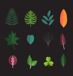 Season forest plant leaves collection icons vector