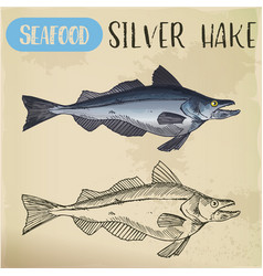 silver hake or new england fish sketch vector image