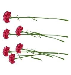 Red clove Bouquet of carnations Set carnation vector image