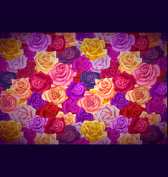 beautiful bright colorful rosebuds wide detailed vector image