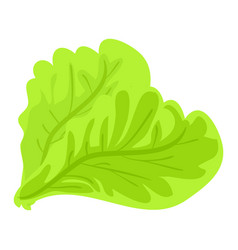green lettuce leaf icon cartoon style vector image