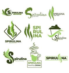 Superfood or detox nutrition spirulina algae vector