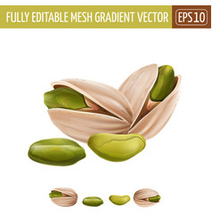 Pistachio nuts on white background vector