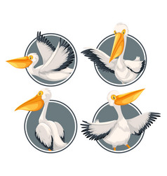 A pelican on sticker template vector